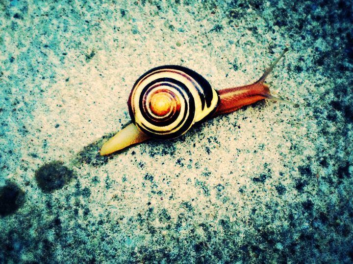 snail trail - Renee leanne Smith