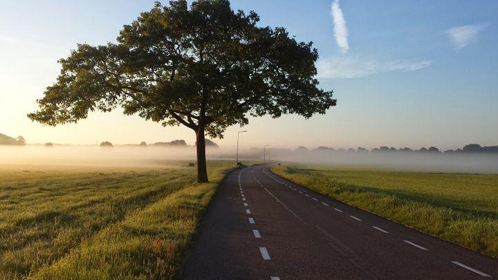 a road and tree - SHOPPINGUSA