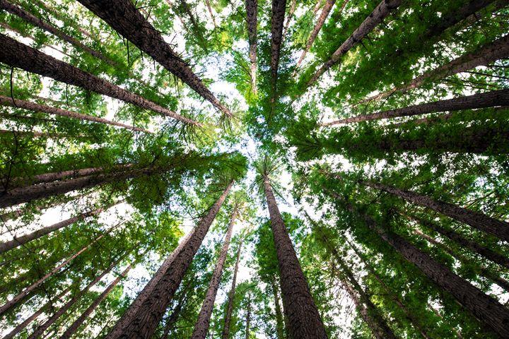 circled trees - SHOPPINGUSA