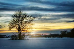 A lonely tree in the winter field