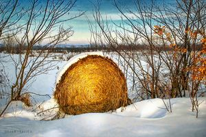 Hay bale forgotten in the snow