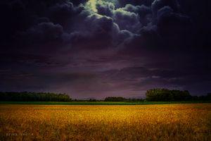Wheat field under the purple sky