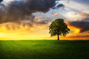 A lone tree under the cloudy sky