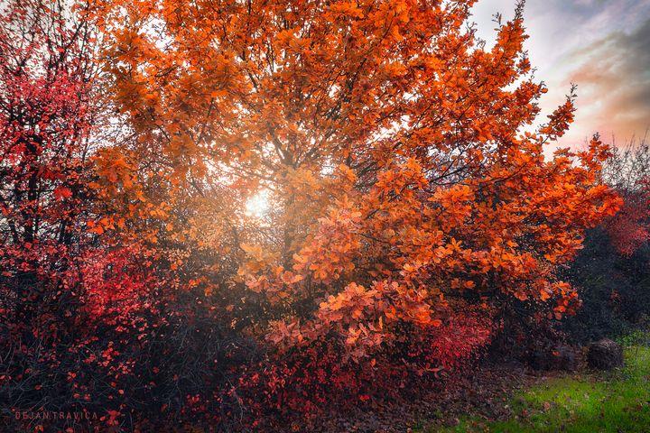 Shining through the autumn leaves - Dejan Travica