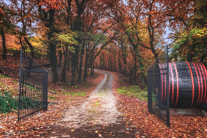Entrance to the autumn forest - Dejan Travica