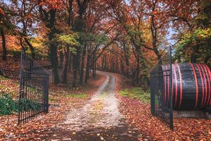 Entrance to the autumn forest