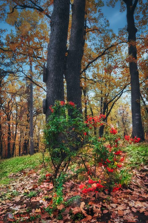 Is it autumn or is it spring? - Dejan Travica
