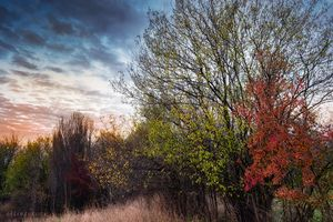 To meet the autumn