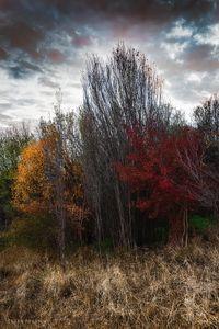 Meet the autumn