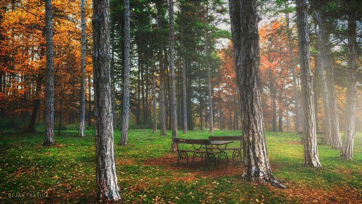 Bench in the woods - Dejan Travica
