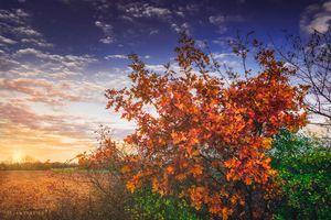 Autumn leaves on an oak branch