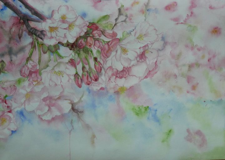 Cherry Blossom - Sumes art