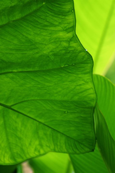 Green tropical leves close up - Sue Rode Photography