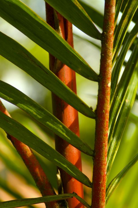 Bamboo intrigue - Sue Rode Photography