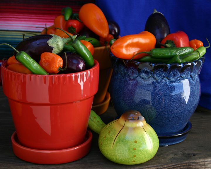Bright pots full of peppers - Sue Rode Photography