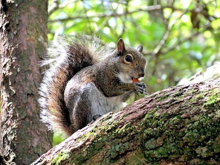 Love Almonds - My Favorite Photos