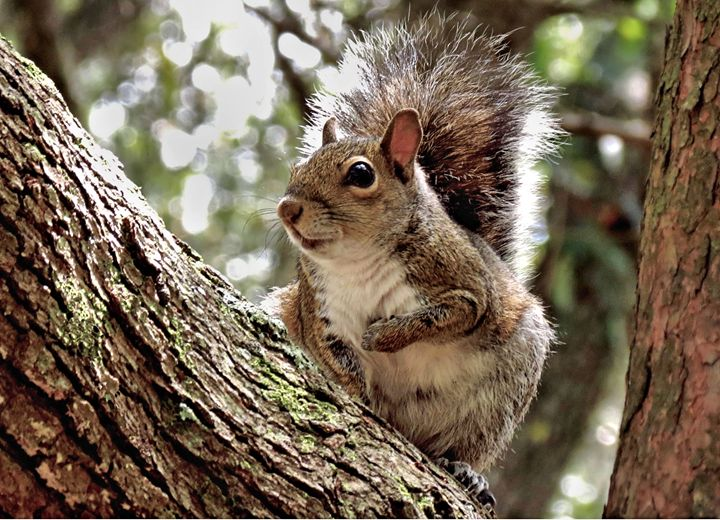 Where's My Almond? - My Favorite Photos
