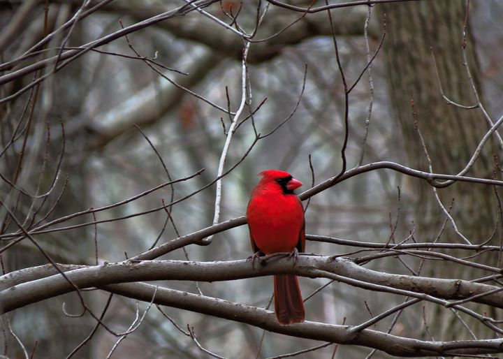 Winter Solitude - My Favorite Photos