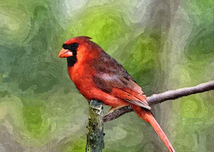 Northern Cardinal - My Favorite Photos
