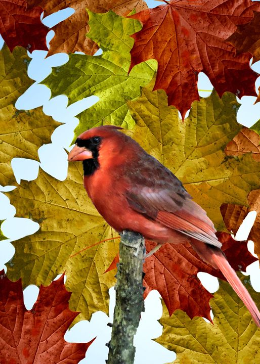 Autumn Colors - My Favorite Photos