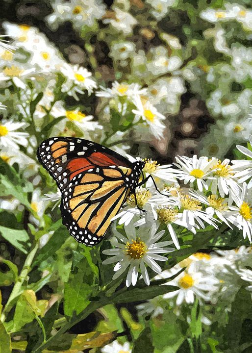 Georgia Monarch - My Favorite Photos