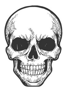 Digitally Sketched Skull