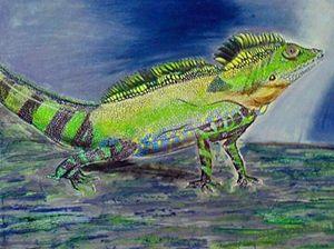grandis lizard