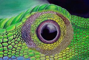 the eyes of grandis lizards