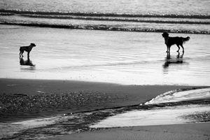 Standoff At The Beach - Aidan Moran Photography