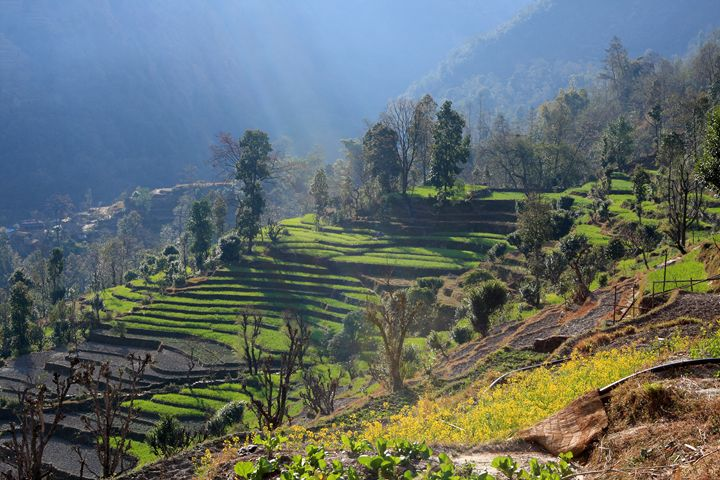 Himalayan Stepped Fields, Nepal - Aidan Moran Photography