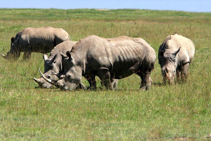 Group Of White Rhino - Aidan Moran Photography