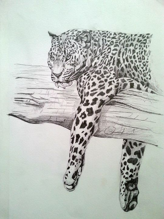 Pencil Drawing Big Cat Original - Drawings And Paintings