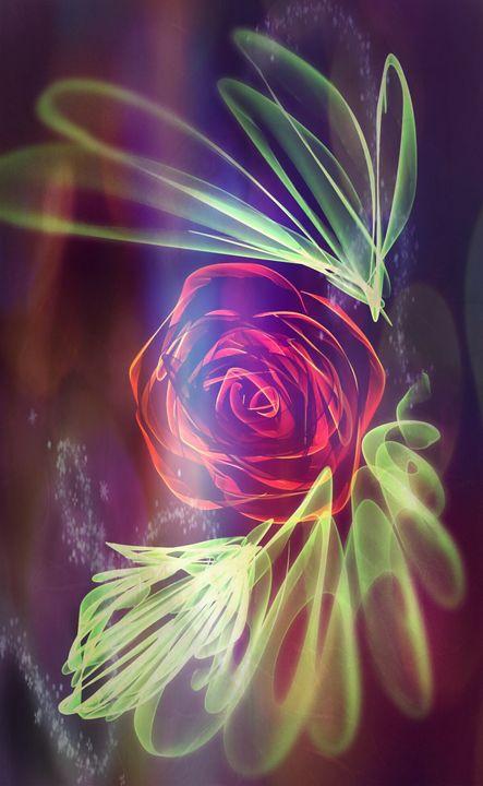 Rose - Xtr