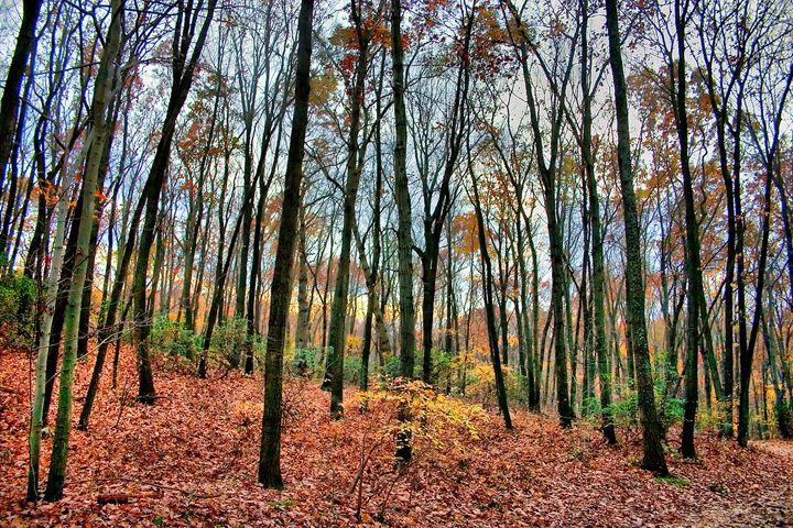 Autumn Dusk - Abstract Thinking