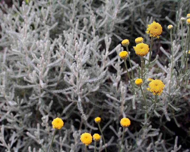 Random Flowers - Abstract Thinking