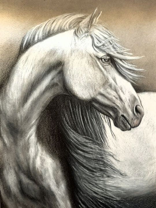 Proud stallion - Art by Mary