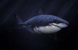SHARK 2018