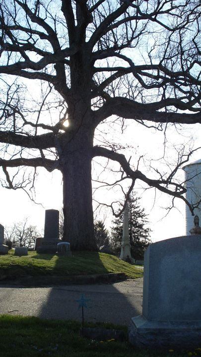 the tree - liliann