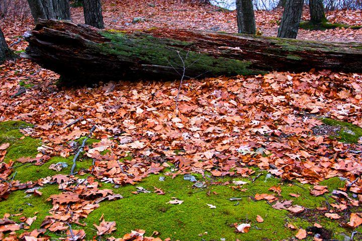 Mossy Tree - Madison Morgens