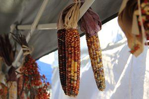 Fall corn - Madison Morgens