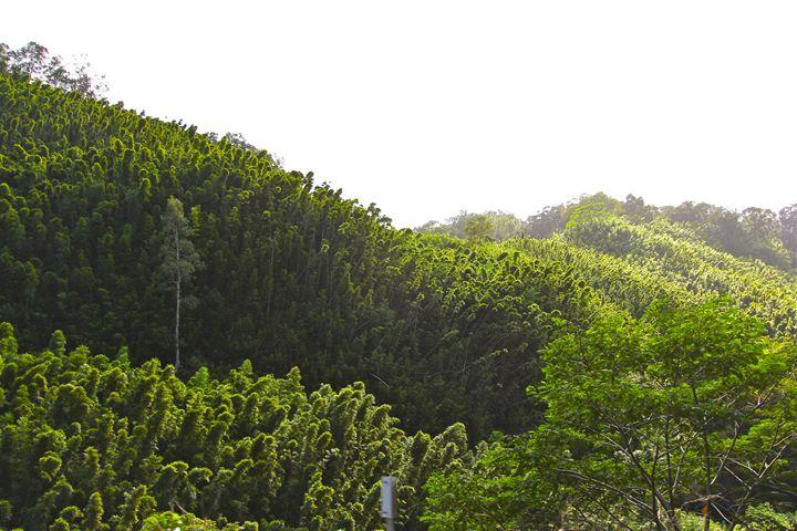 evergreen - Madison Morgens