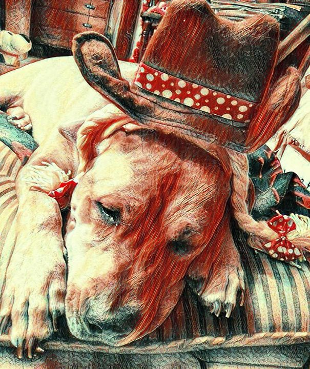Sad Marley Cowgirl Dog - Fabulous Sammie