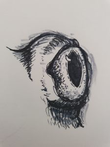 Blue Eyed Frog Sketch
