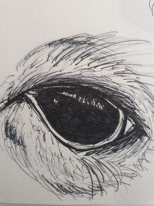 Sketch Owl Eye