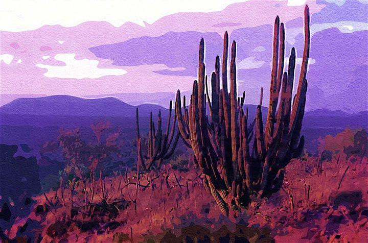 Sahuaro. Baja desert - meredesromero