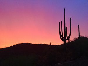 Seamless Saguaro Sunset