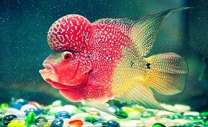 Multicolored fish with strange shape