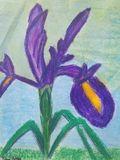 Original Iris Oil Pastel Painting