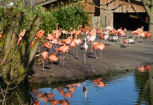Flamingos - Helen A. Lisher