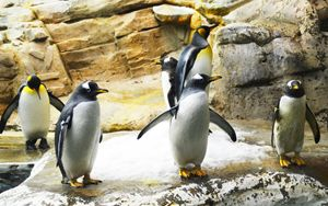 Penguins - Helen A. Lisher